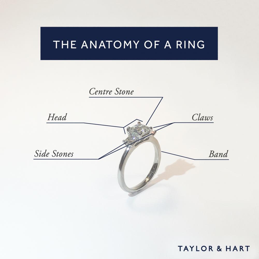 Ring Anatomy parts