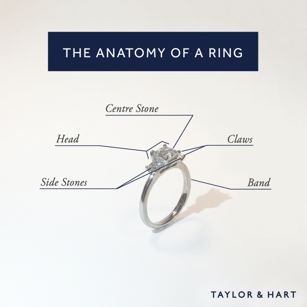 Ring Anatomy parts