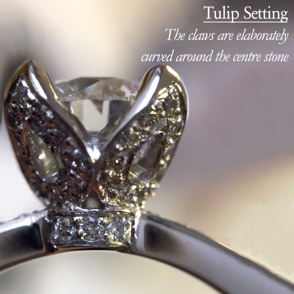 tulip setting