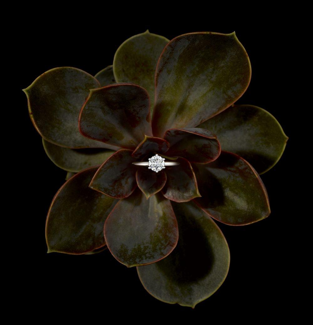 Diamond Basics A Simple Guide To The 4 Cs Taylor Hart